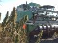 mccallister-hemp-11-harvest-077
